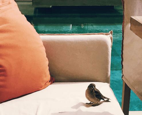A little cute bird in Hotel Margi, Athens